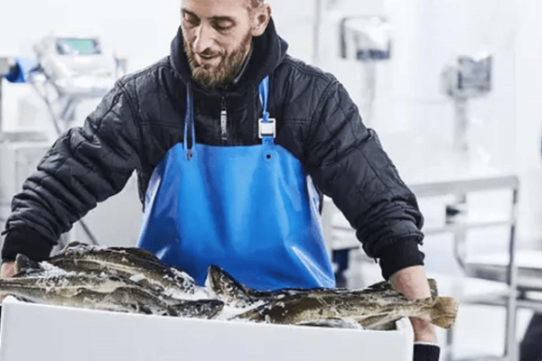Norcod Harvest First Cod