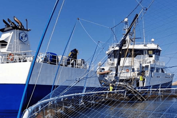 Cod Farmer Norcod Makes First Harvest