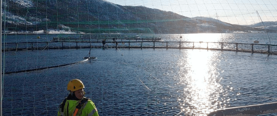 Top Norwegian Salmon Exec Ups Investment In Norcod…